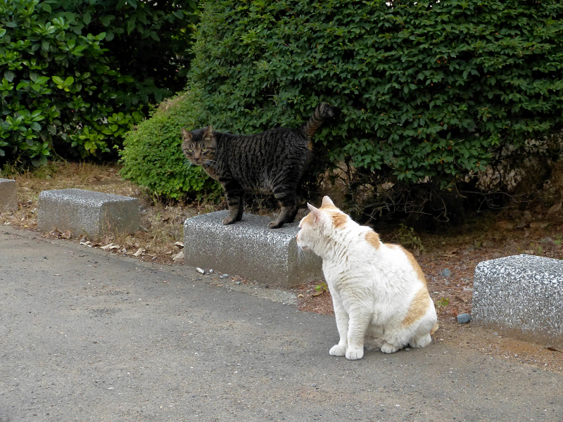 縁石の猫2匹2