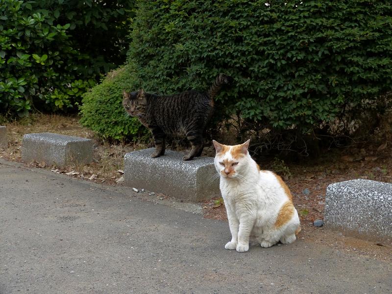 縁石の猫2匹3
