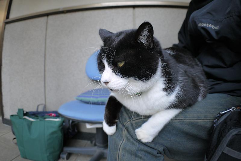 お堂の前で膝に乗ってる黒白猫1