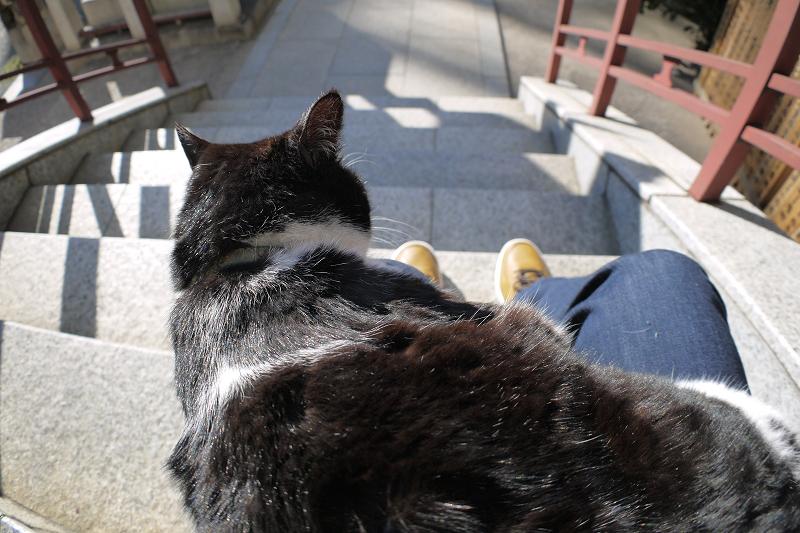 垂れている黒白猫1