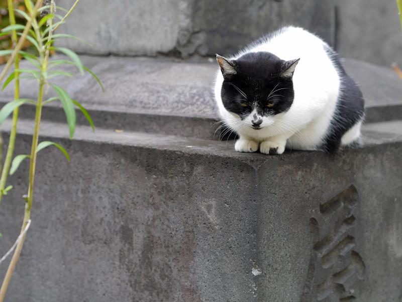 石碑と白黒猫1