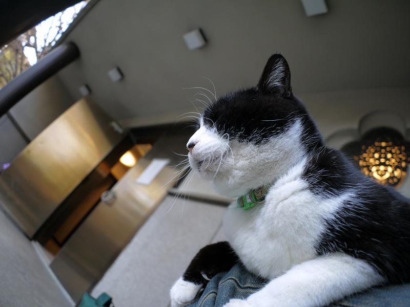 お堂の前で膝に乗ってる黒白猫2