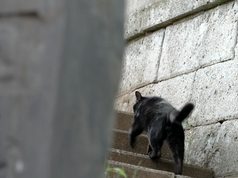 階段を駆け上がる黒猫1