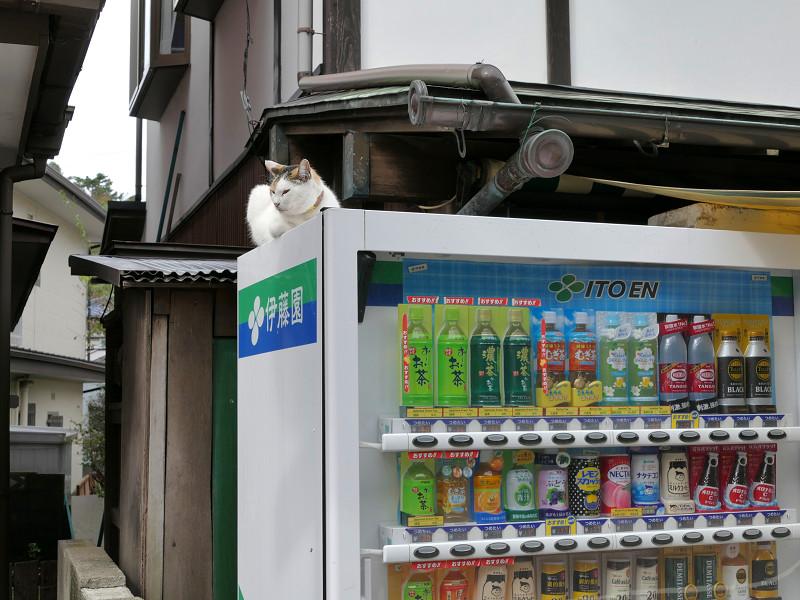 自動販売機と三毛猫1