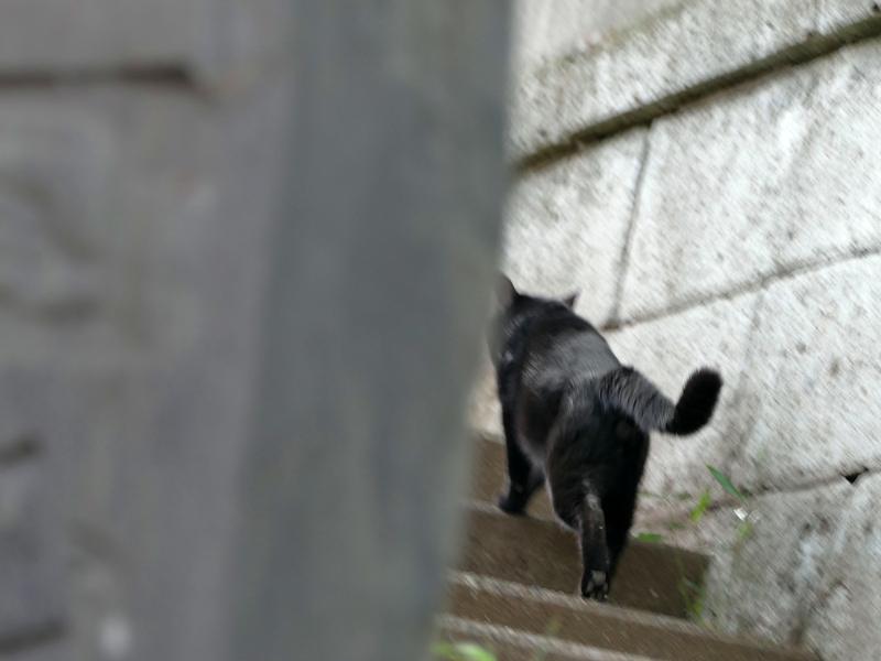 階段を駆け上がる黒猫2