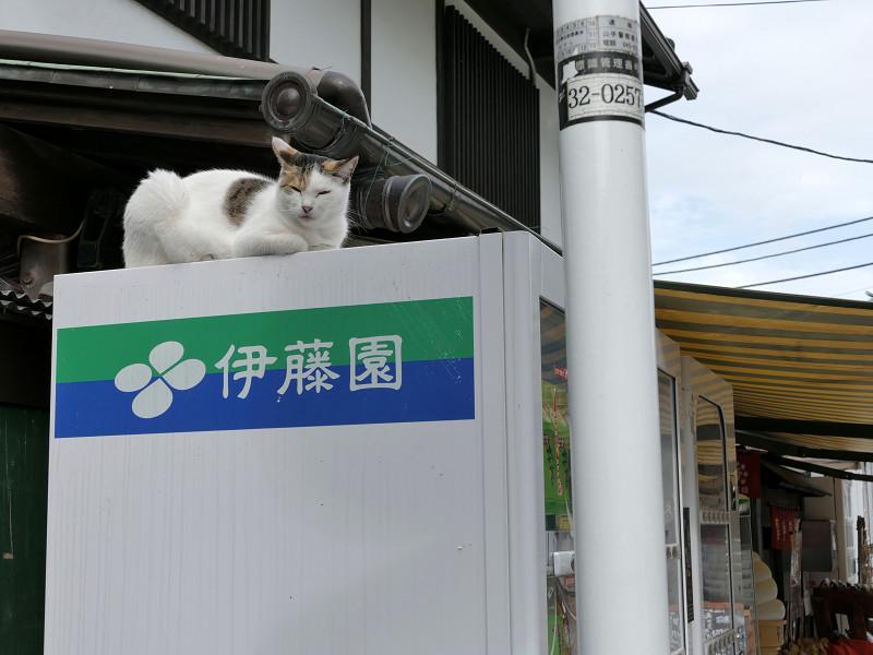 自動販売機と三毛猫2