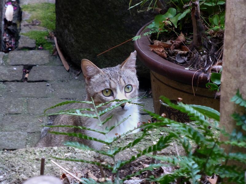 小料理屋の庭先猫2