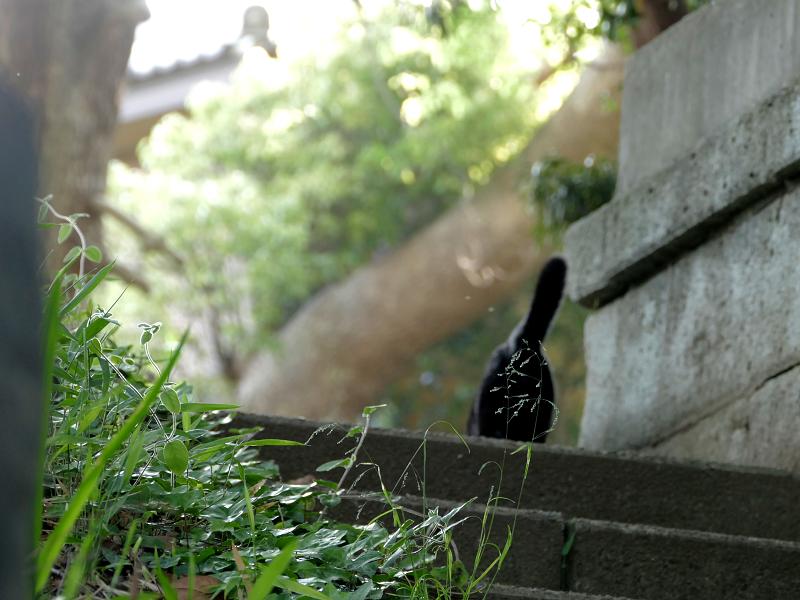 階段を駆け上がる黒猫3