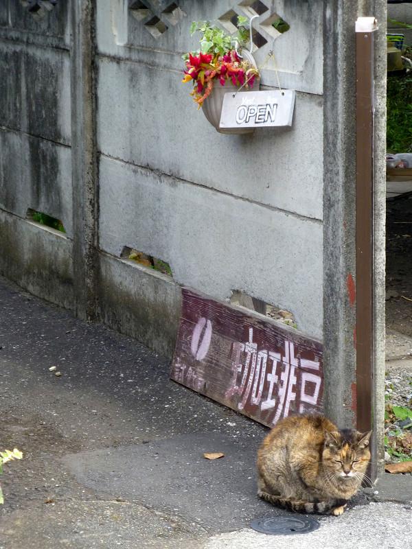 民家路地のサビ柄猫1