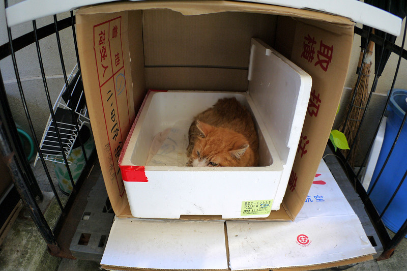 ハウスの中の茶トラ猫2