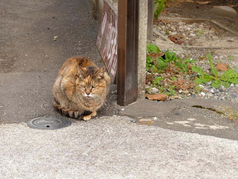 民家路地のサビ柄猫2