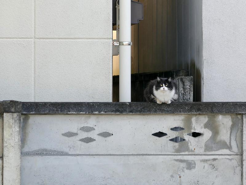 ブロック塀と毛長の黒白猫3