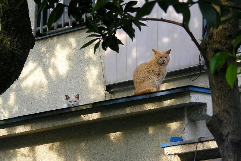 庇の上の猫2匹1