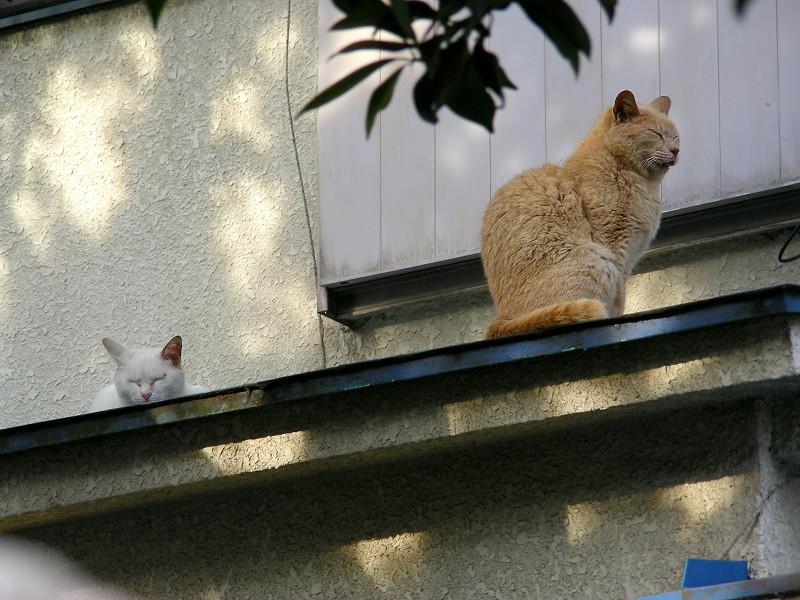 庇の上の猫2匹2