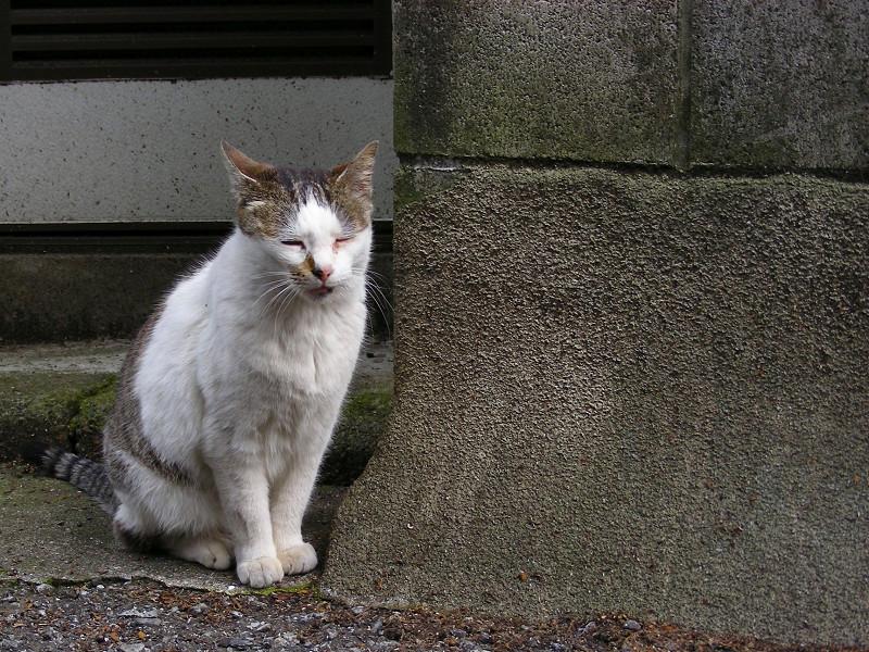 ちょこんと座る白キジ猫