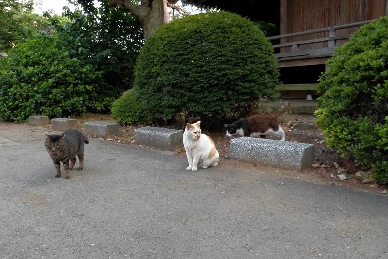 古堂の4匹の猫たち1