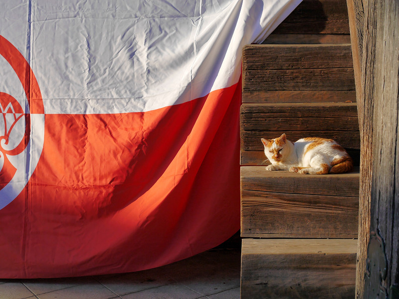 紅白段幕と茶白猫1