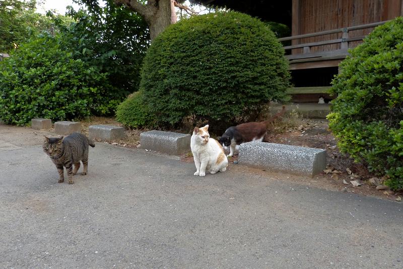 古堂の4匹の猫たち2