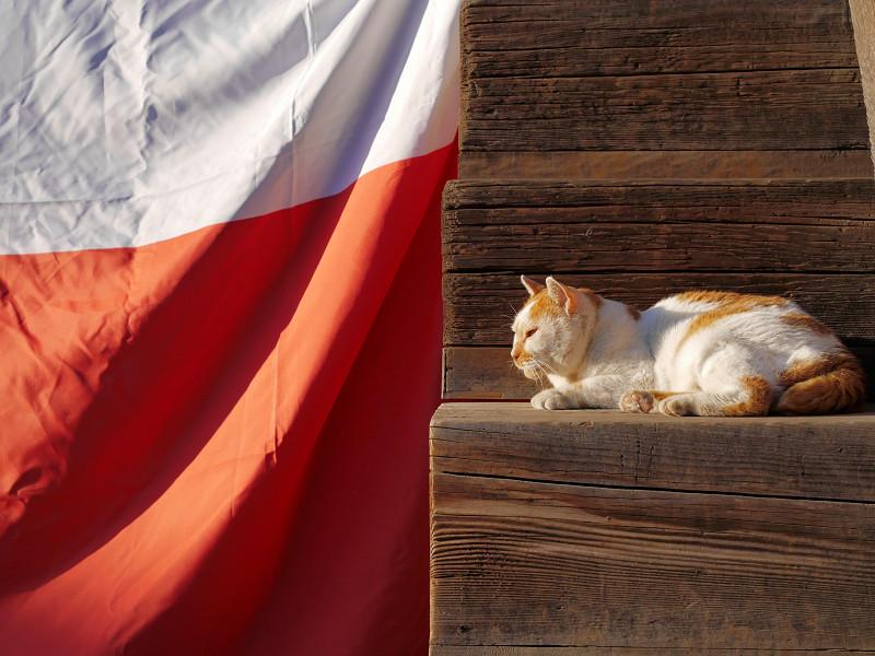 紅白段幕と茶白猫2