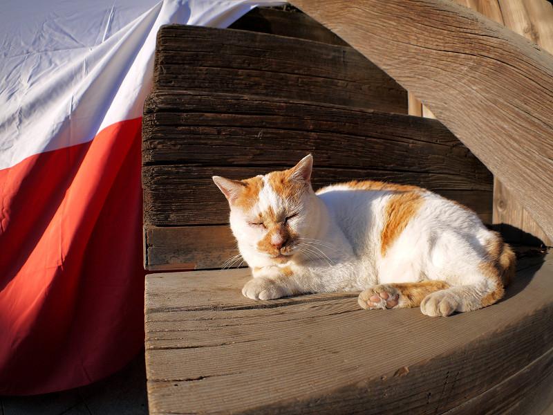 紅白段幕と茶白猫3