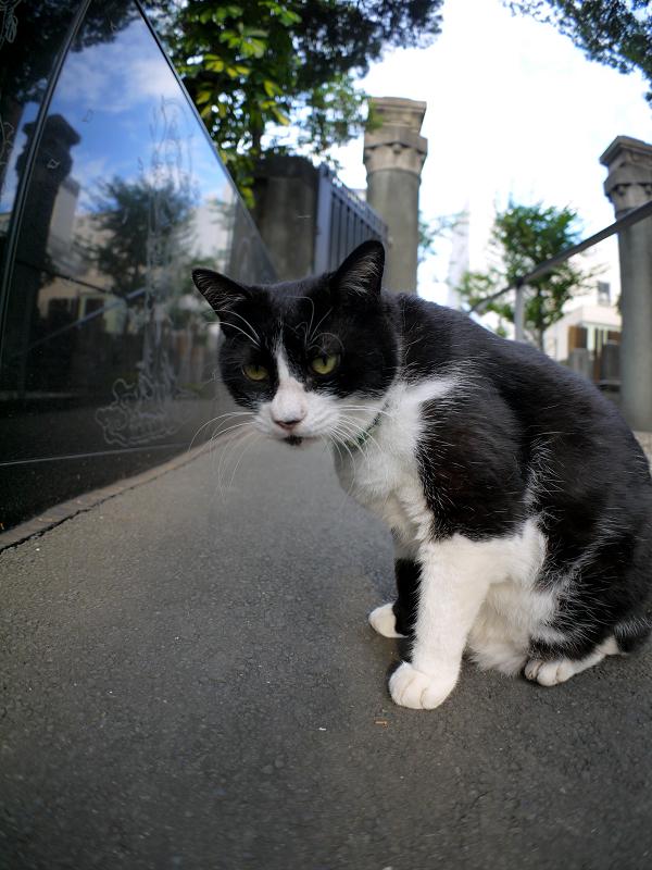 スロープの黒白猫1