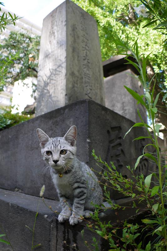 石碑から興味津々のサバトラ仔猫2