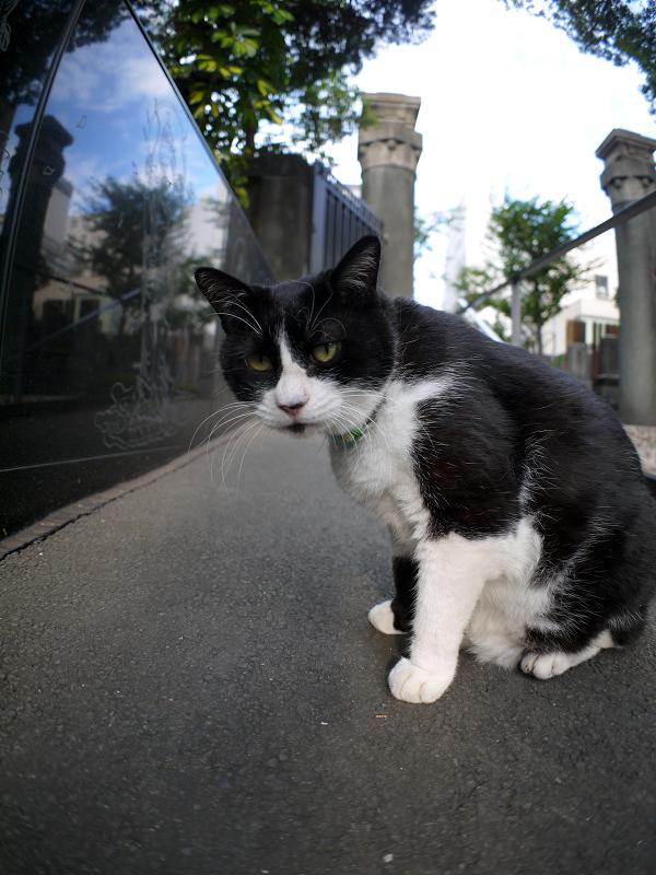 スロープの黒白猫2