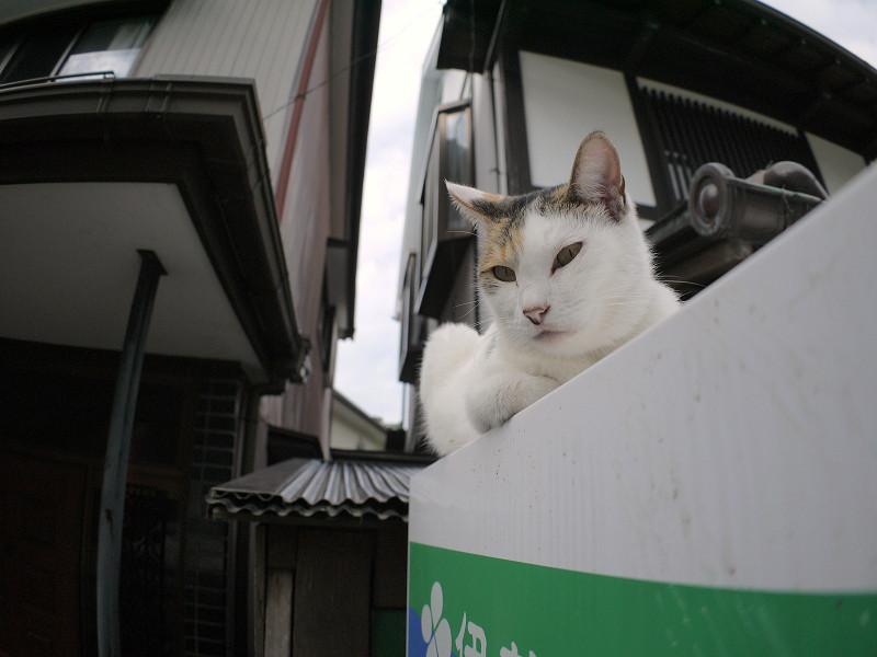 自販機上の三毛猫1