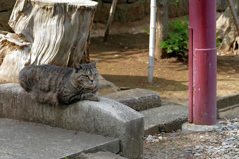 境内の石橋にいるキジトラ猫1