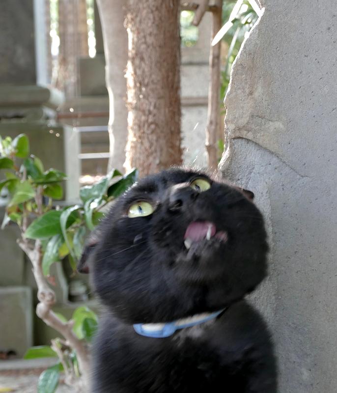 見上げる黒猫2