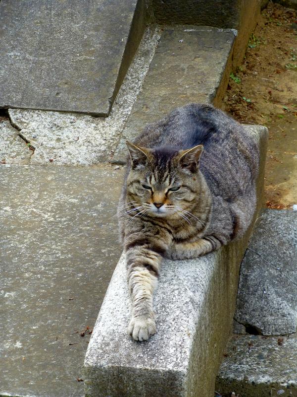 境内の石橋にいるキジトラ猫3