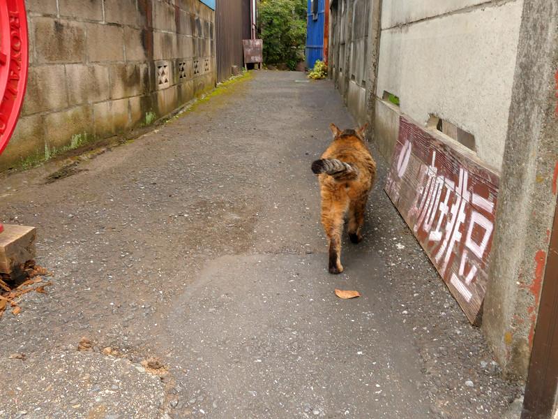 民家路地へ戻るサビ柄猫1