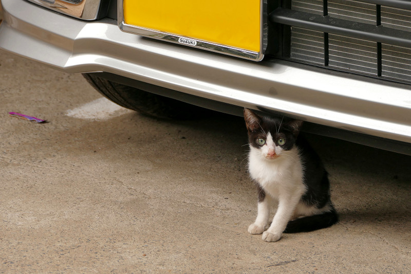 車の下の黒白仔猫1