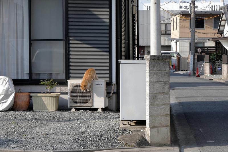 室外機から降りてくる毛長の茶白猫2