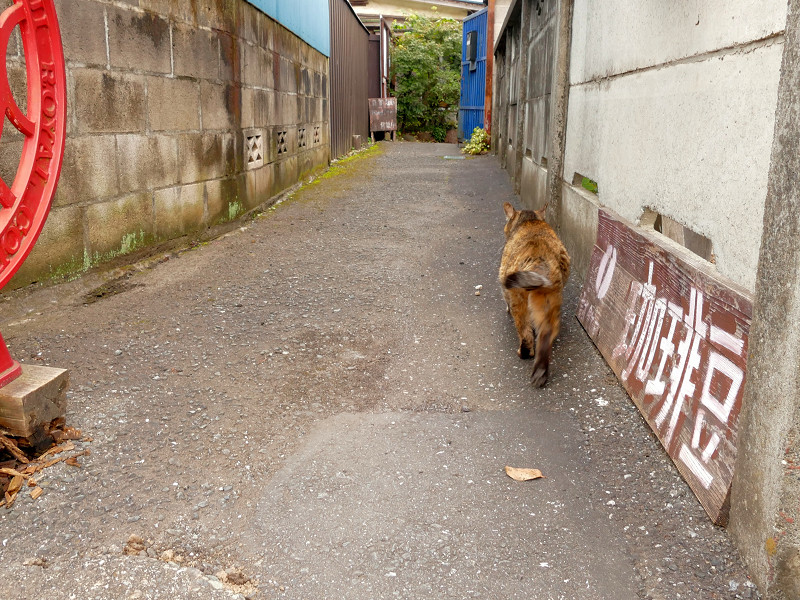 民家路地へ戻るサビ柄猫2