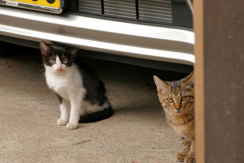 車の下の黒白仔猫2