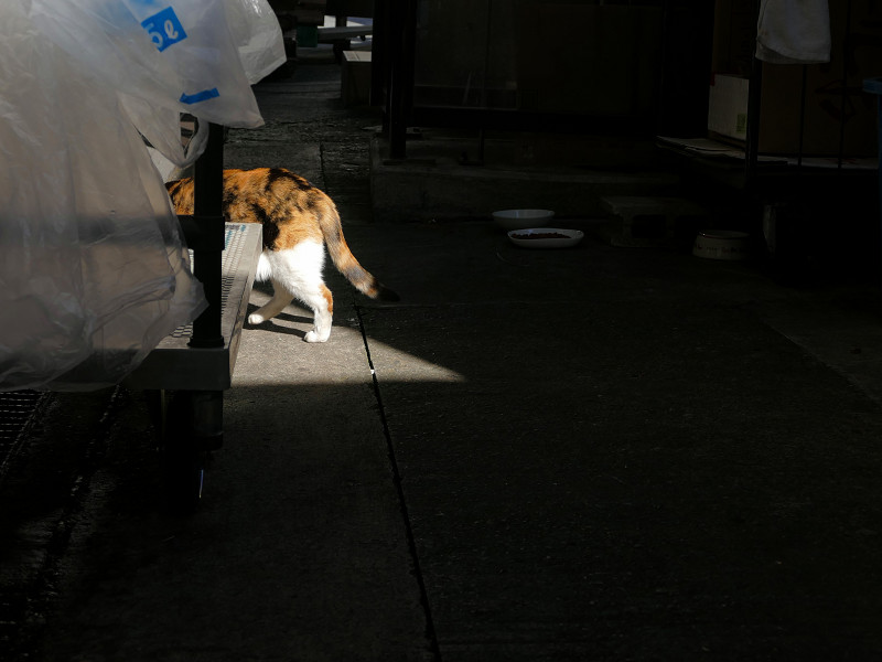 日陰から日向に出てきた三毛猫2