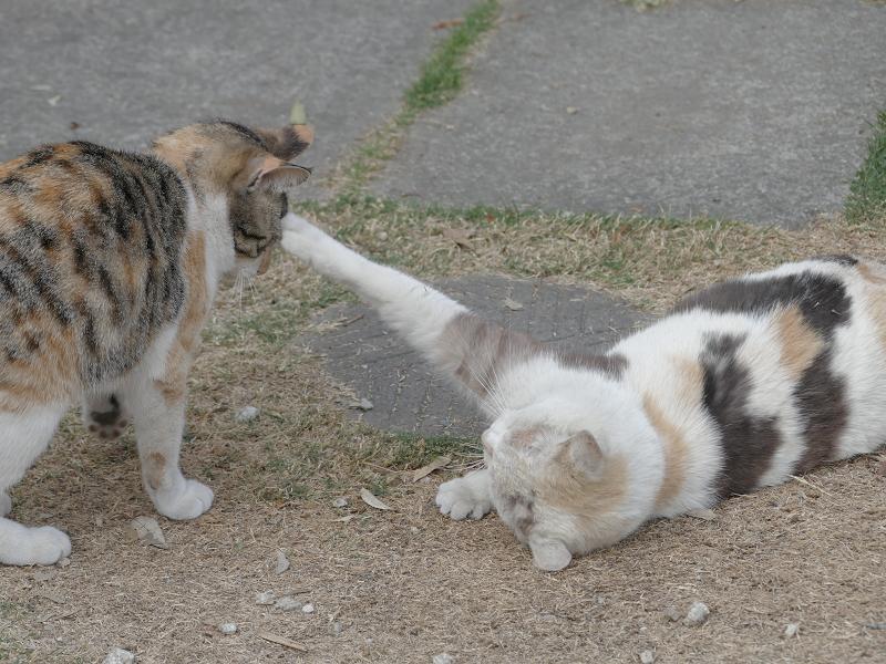 何かを話していた若い三毛猫と大人の三毛猫3