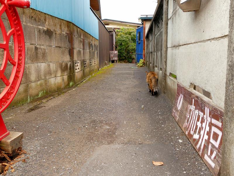 民家路地へ戻るサビ柄猫3