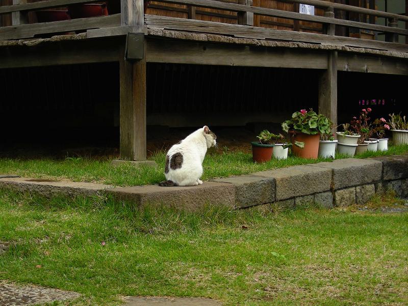 濡れ縁の下の白黒猫1