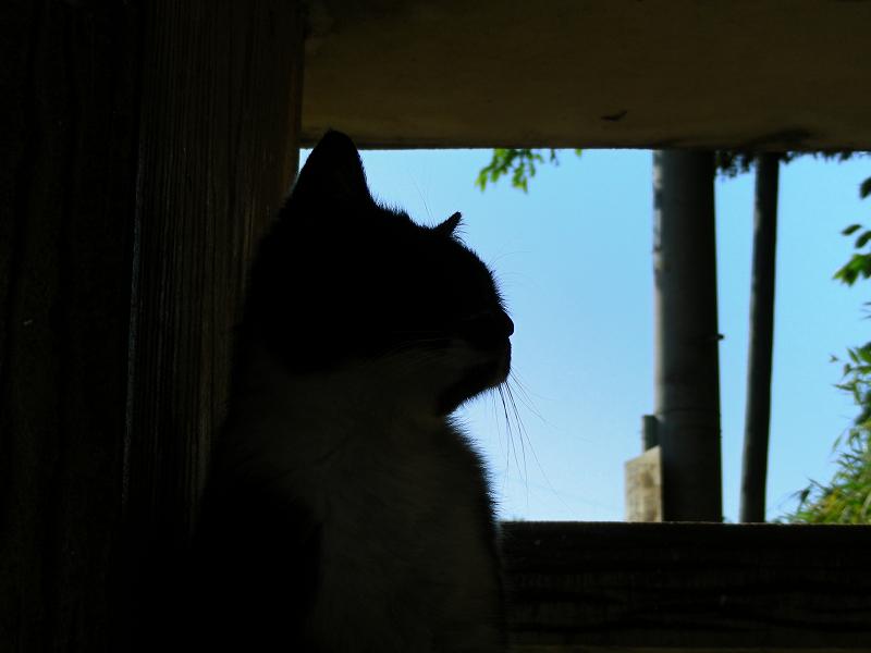 ベンチ下の黒白猫1