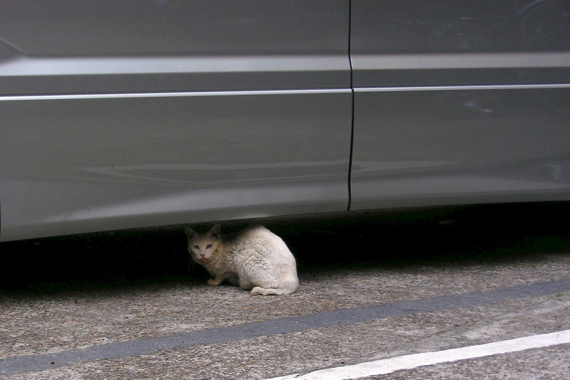 車の下のキロ猫1