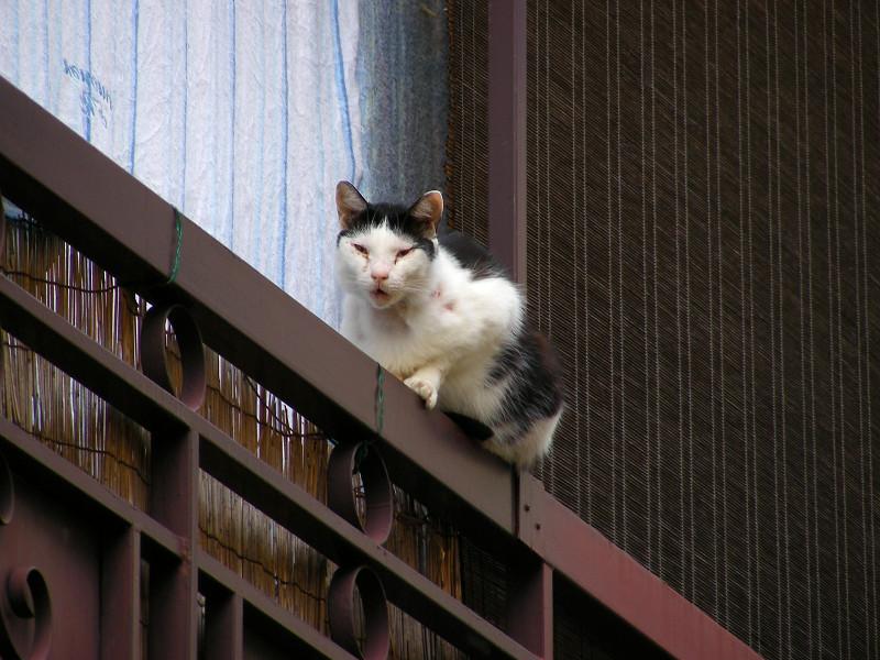 手摺り黒白猫