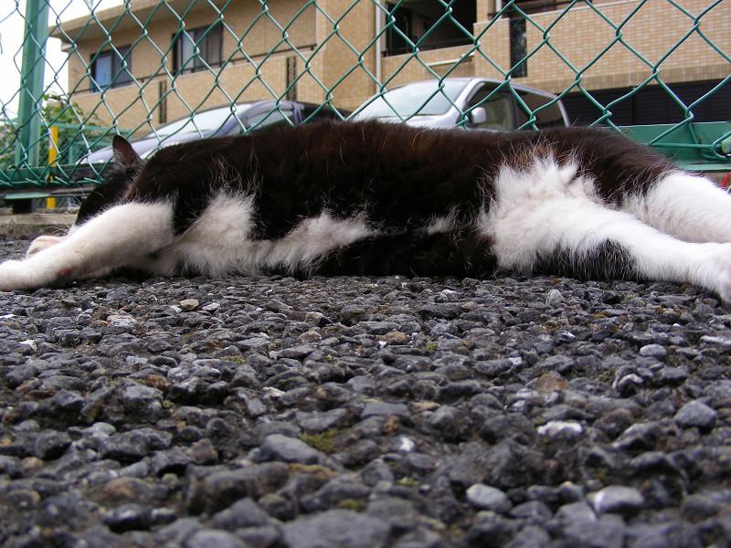駐車場で横になってる『メヤニー』1
