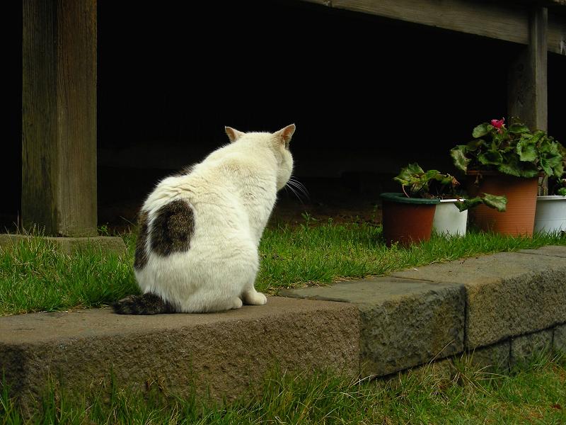 濡れ縁の下の白黒猫2