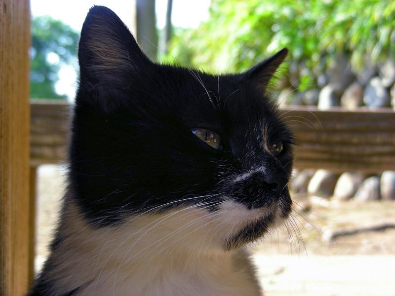 ベンチ下の黒白猫2