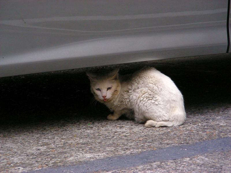 車の下のキロ猫2