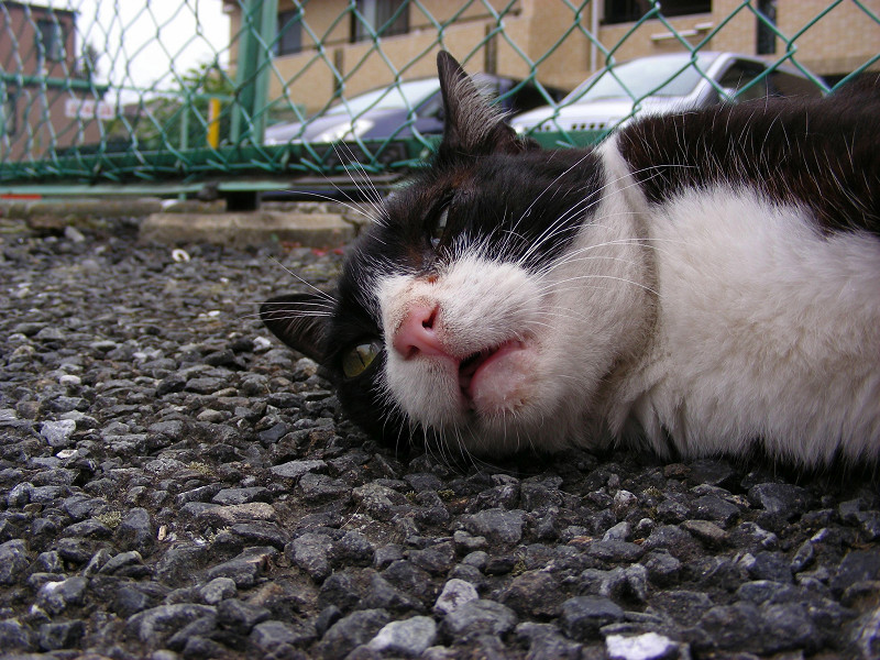 駐車場で横になってる『メヤニー』2