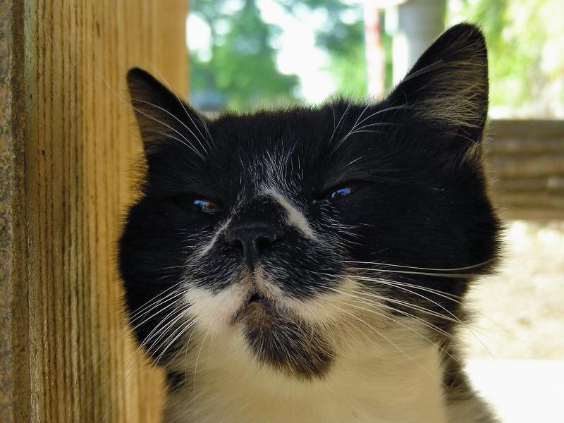 ベンチ下の黒白猫3