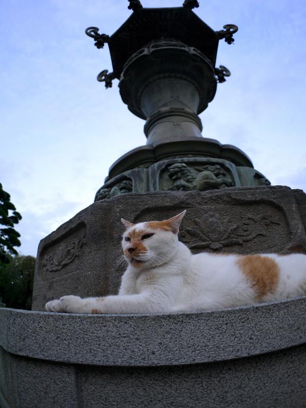 銅燈籠と白茶猫とキジトラ猫1